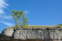Tree at the frontline of a limestone cliff