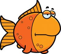 Bored Cartoon Goldfish