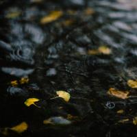 Puddle of Rain