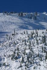 alpine skiing British Columbia back country