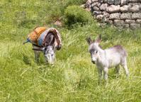 Donkey and Foal in Jerusalem