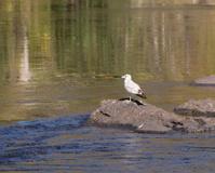 Bird on a rock