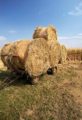 stubble bales