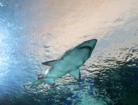 Shark passes overhead