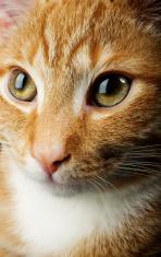 cat`s portrait