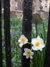 Flowers Cemetery