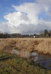 Marsh Land and Rural Sky