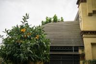 Barcelona green house