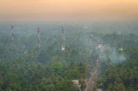 Wonderful sunrise above tropical palm tree forest