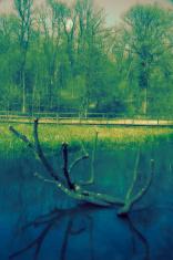 Cross Processed Landscape
