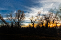 Evening Winter Sun
