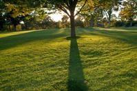 Autumn tree shadow