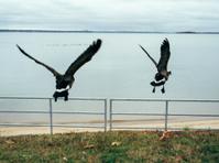 Birds Taking Flight