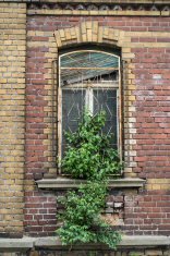 Derelict building with plant