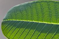 Details of a leaf