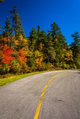 Autumn color along the Mount Washington Auto Road, near Gorham,