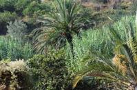 Palmanbätter - Spanien