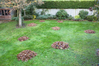 Autumn or winter leaves swept into big piles on grass