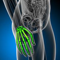 3d render medical illustration of the hand bone
