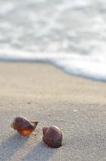Clamshell on sunny beach