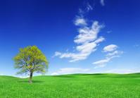 Landscape - lonely tree on green field (XXXL size)
