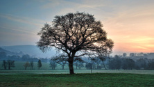 English Countryside Sunrise
