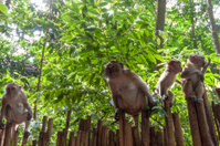 Railay beach in Krabi Thailand monkeys