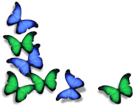Blue green butterflies, isolated on white background