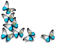 San Marino flag butterflies, isolated on white background