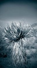 Lone Cactus in Desert