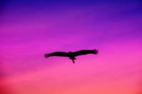 twilight flight