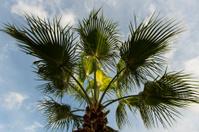 Palm, Antalya, Turkey