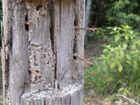 Rusty nails in broken fence