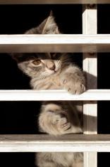 Kitten behind the bars