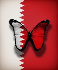 Bahrain flag butterfly, isolated on flag background