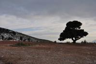 lone tree under cloudy winter sky