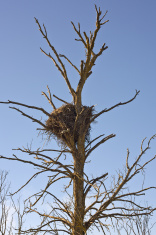 Empty stork nest
