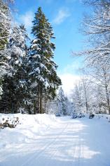 Snowy dirt road