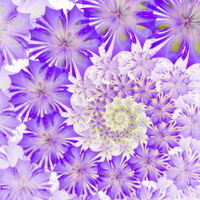 Spiral flower background. Purple palette. Computer generated