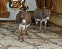 Hee Haw Donkeys