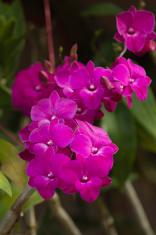 Orchids violet beautiful bouquet