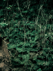 Grass growing on hillside during monsoon
