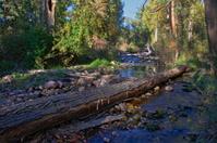 Rattle Snake Creek