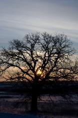Early Morning Sun & Tree