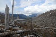 blast zone of Mount St. Helens