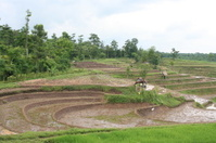 Indonesian countryside