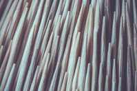 Close up Toothpick macro background