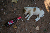 Animal_Puppy_beer