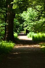 Pathway in forest around Schloss Benrath