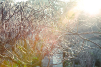 Details of Branch in winter